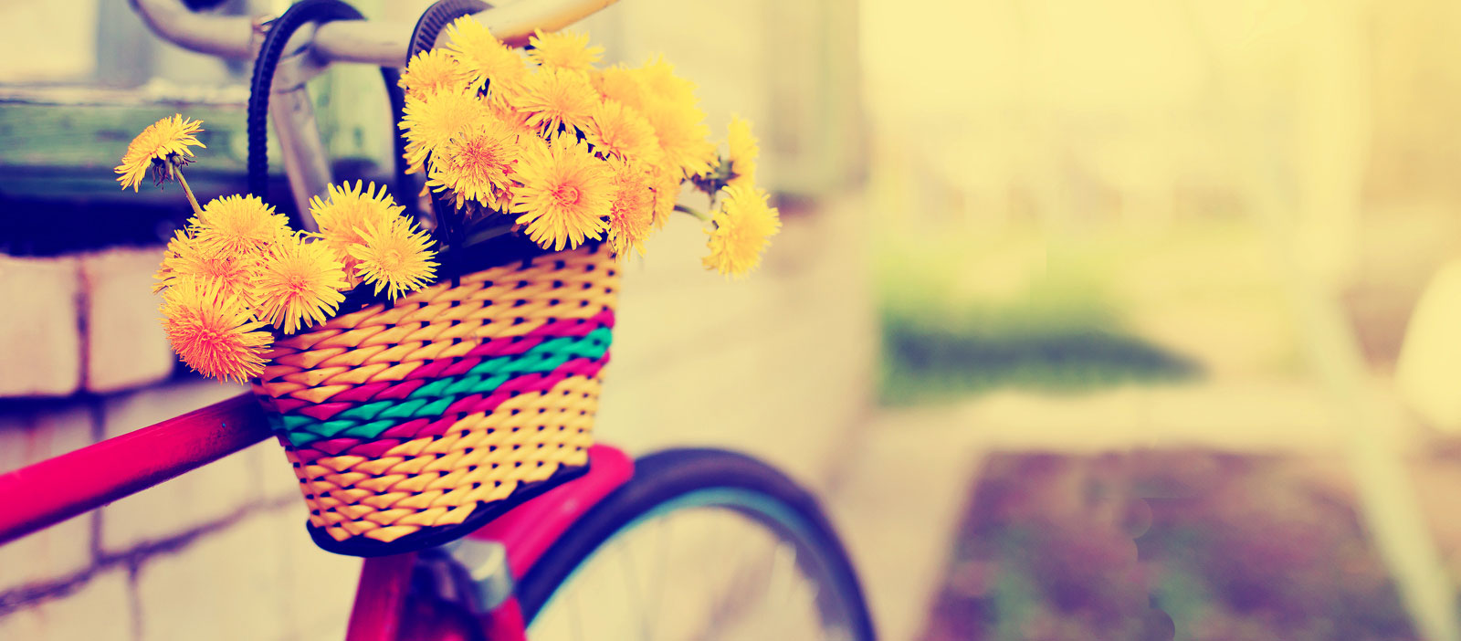 A bicycle with sunflowers in the basket.